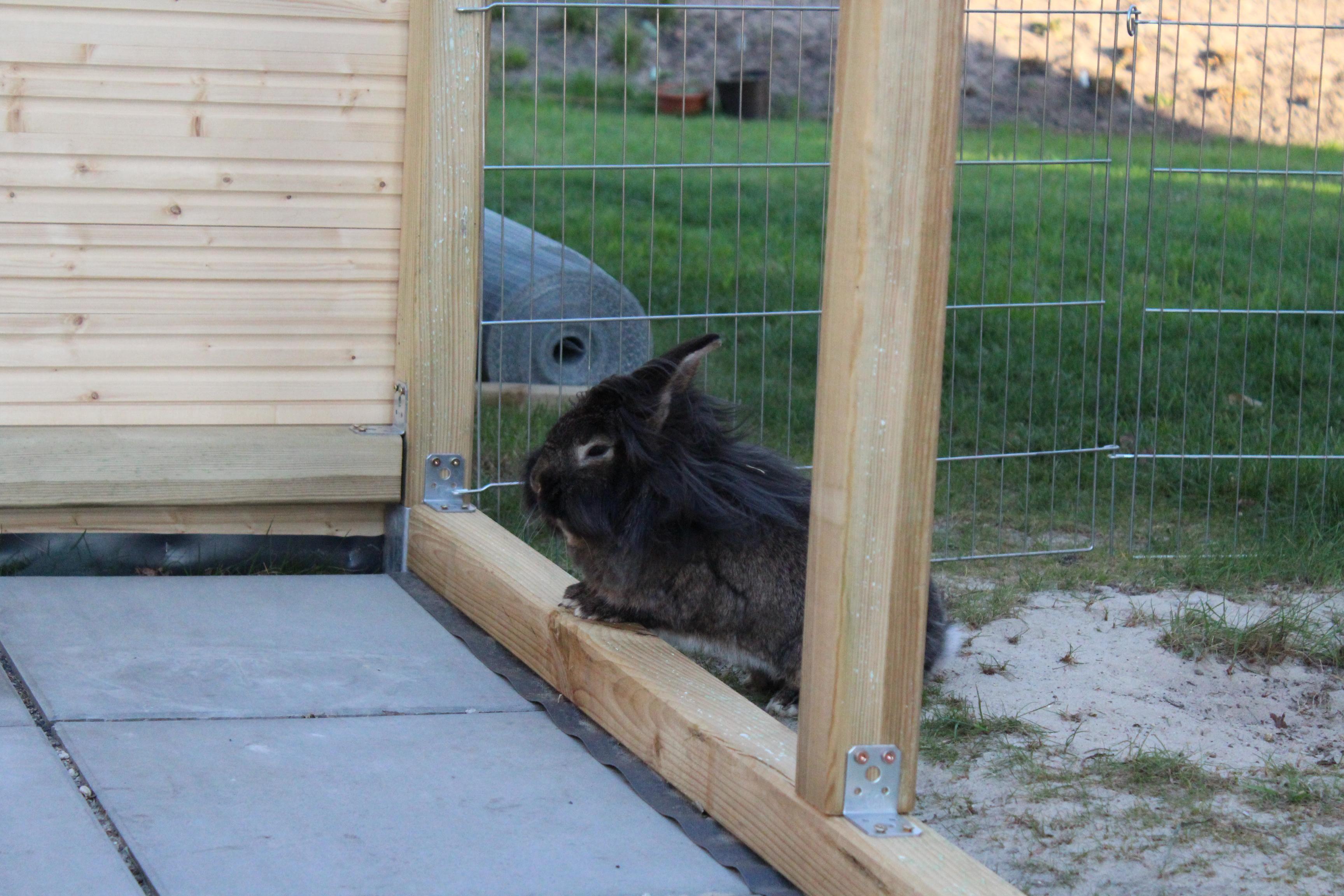 Bob inspiziert das neue Wohnzimmer.