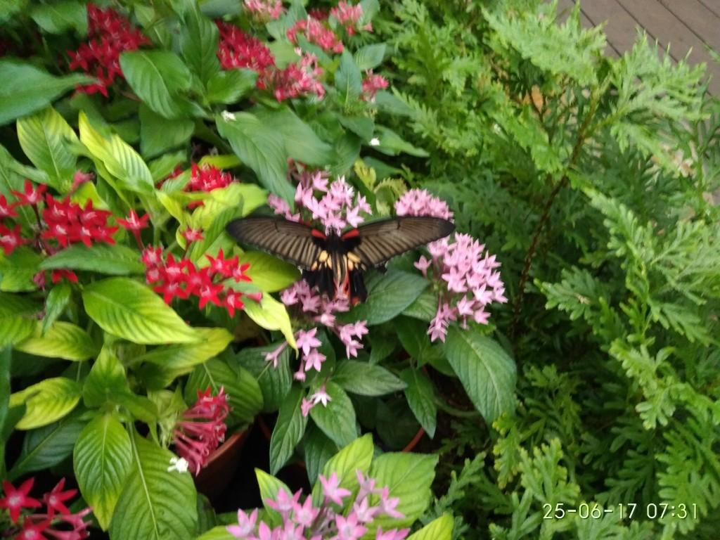 Im Flughafen Singapur gibt es einen Schmetterlingsgarten