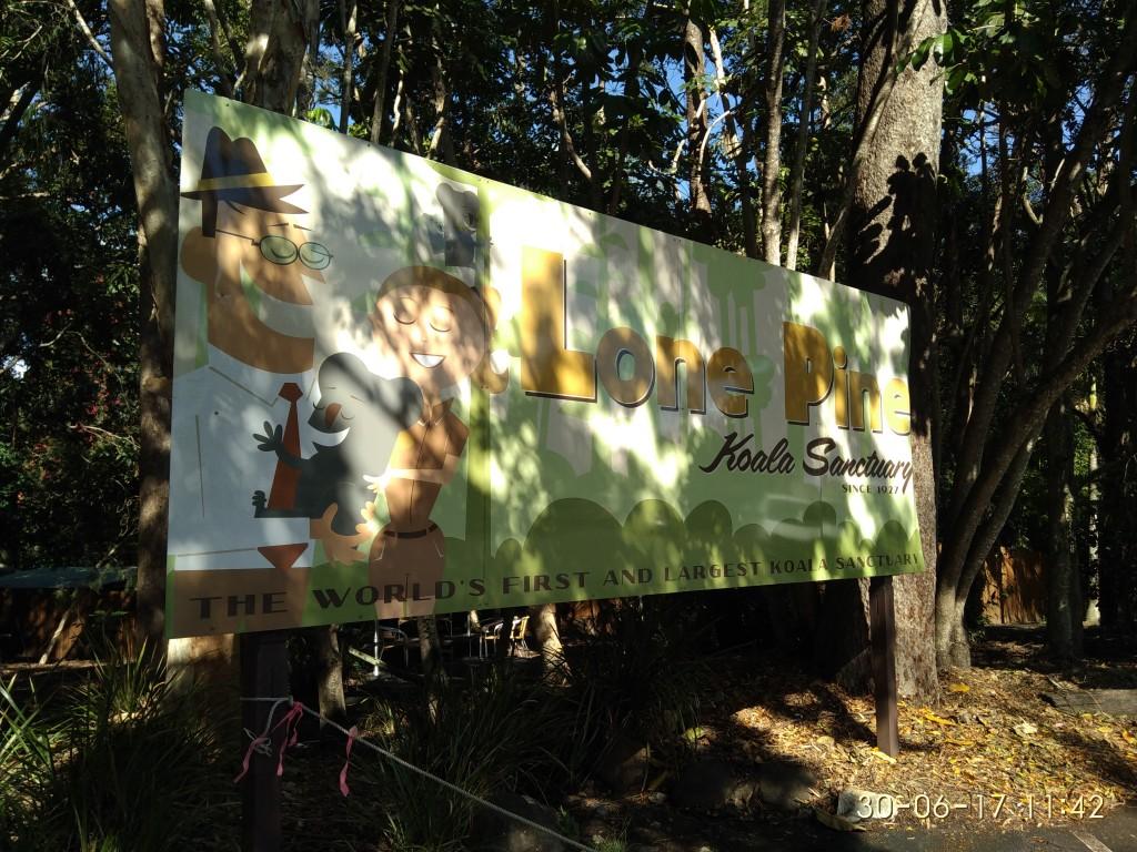 Freitag hatte ich frei und besuchte das Koala-Sanctuary in Lone Pine.