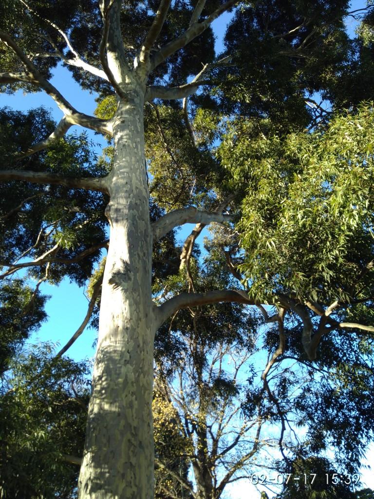 In Melbourne habe ich einen ganzen Tag im botanischen Garten verbracht. Es gibt hier viele große Parks.
