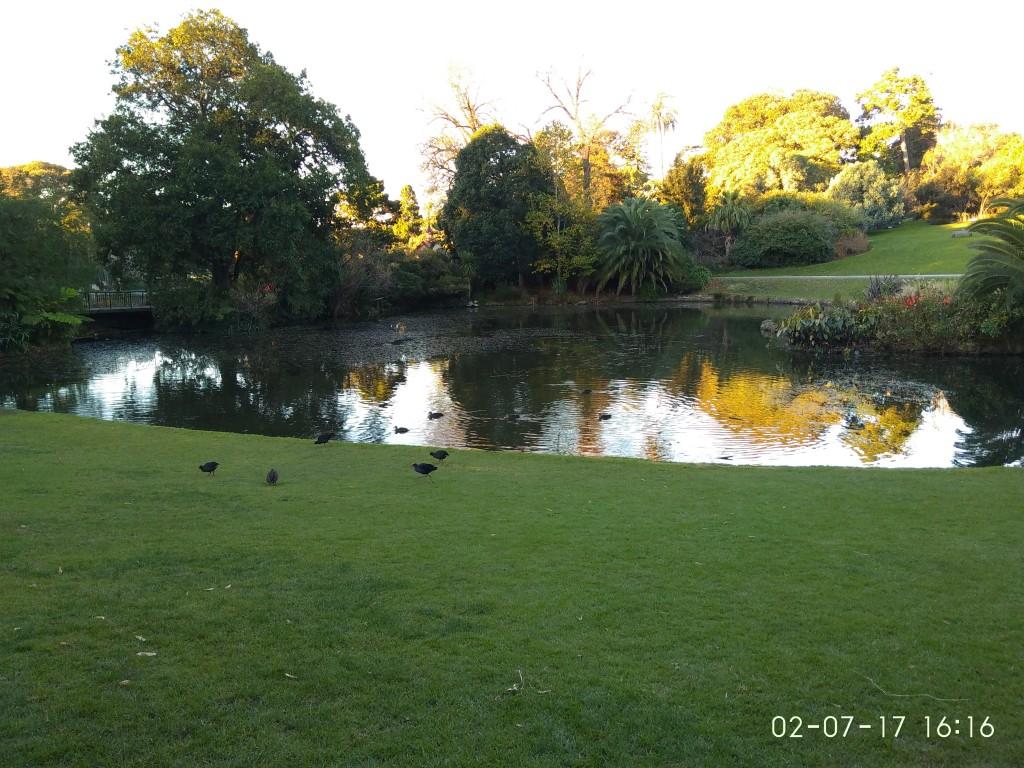 Ein See im botanischen Garten. Diese kleinen Teichhühner haben sich ständig gezofft.