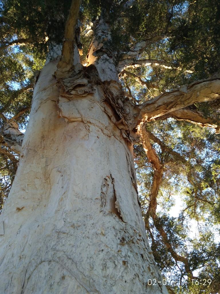 Noch ein interessanter Baum.