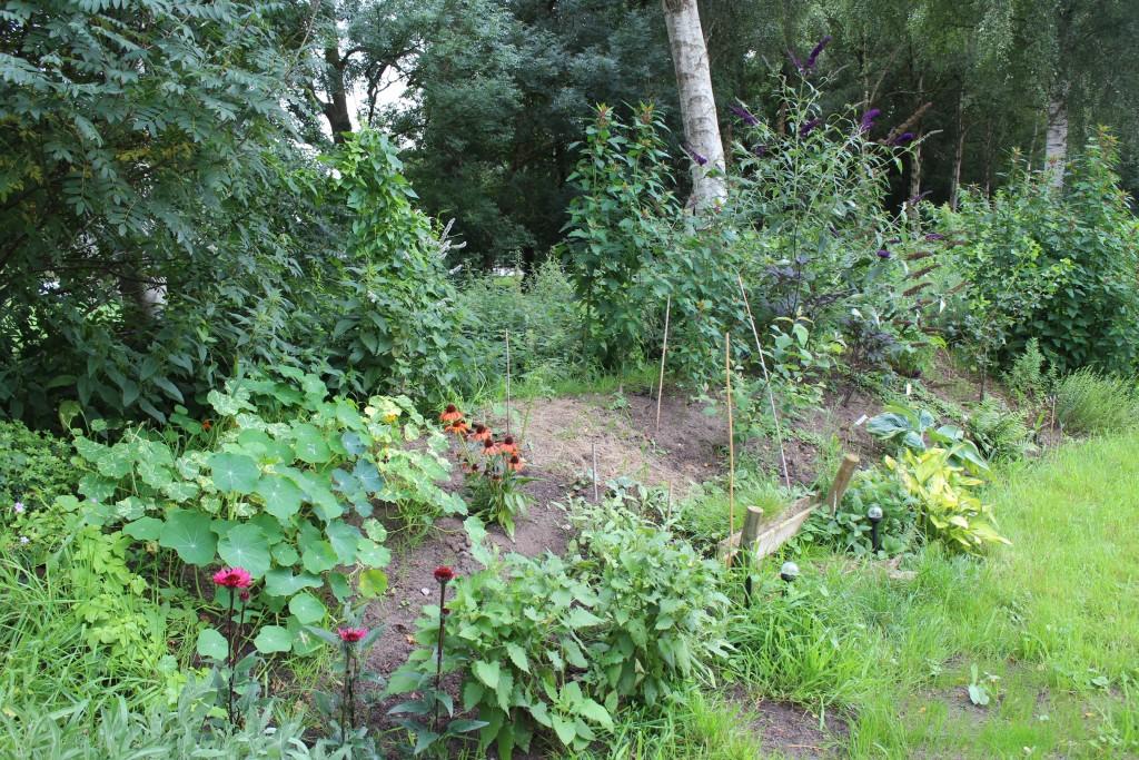 Dieses Jahr kommt etwas Farbe in die Wall-Bepflanzung. Die Salbei-Pflanzen sind gut angewachsen.