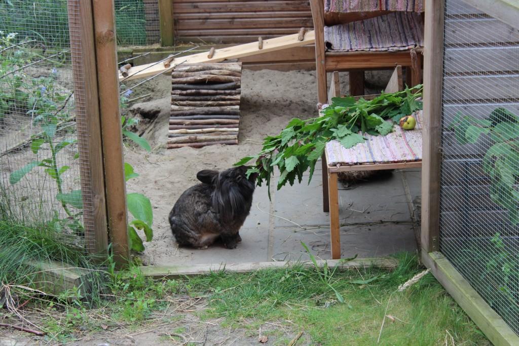 Baumspinat ist großartiges Kaninchenfutter